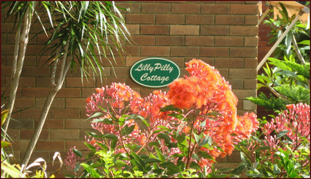 Lillypilly - Accommodation in Brisbane