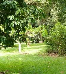 Kingfisher Park Birdwatchers Lodge - Accommodation in Brisbane