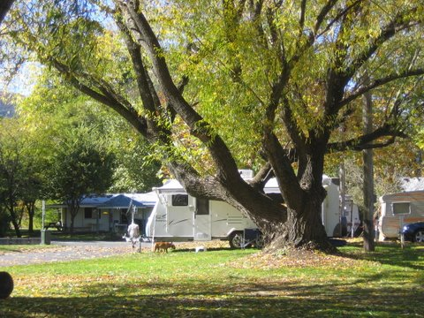 Tumbarumba Creek Caravan Park - Accommodation in Brisbane