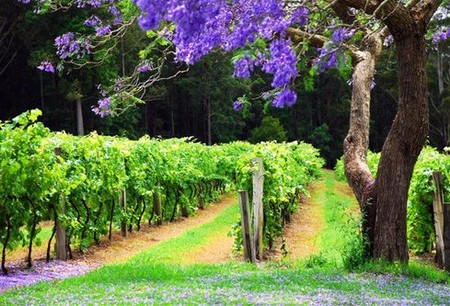 Bago Vineyards - Accommodation in Brisbane