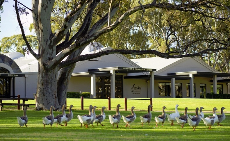 Serafino McLaren Vale - Accommodation in Brisbane