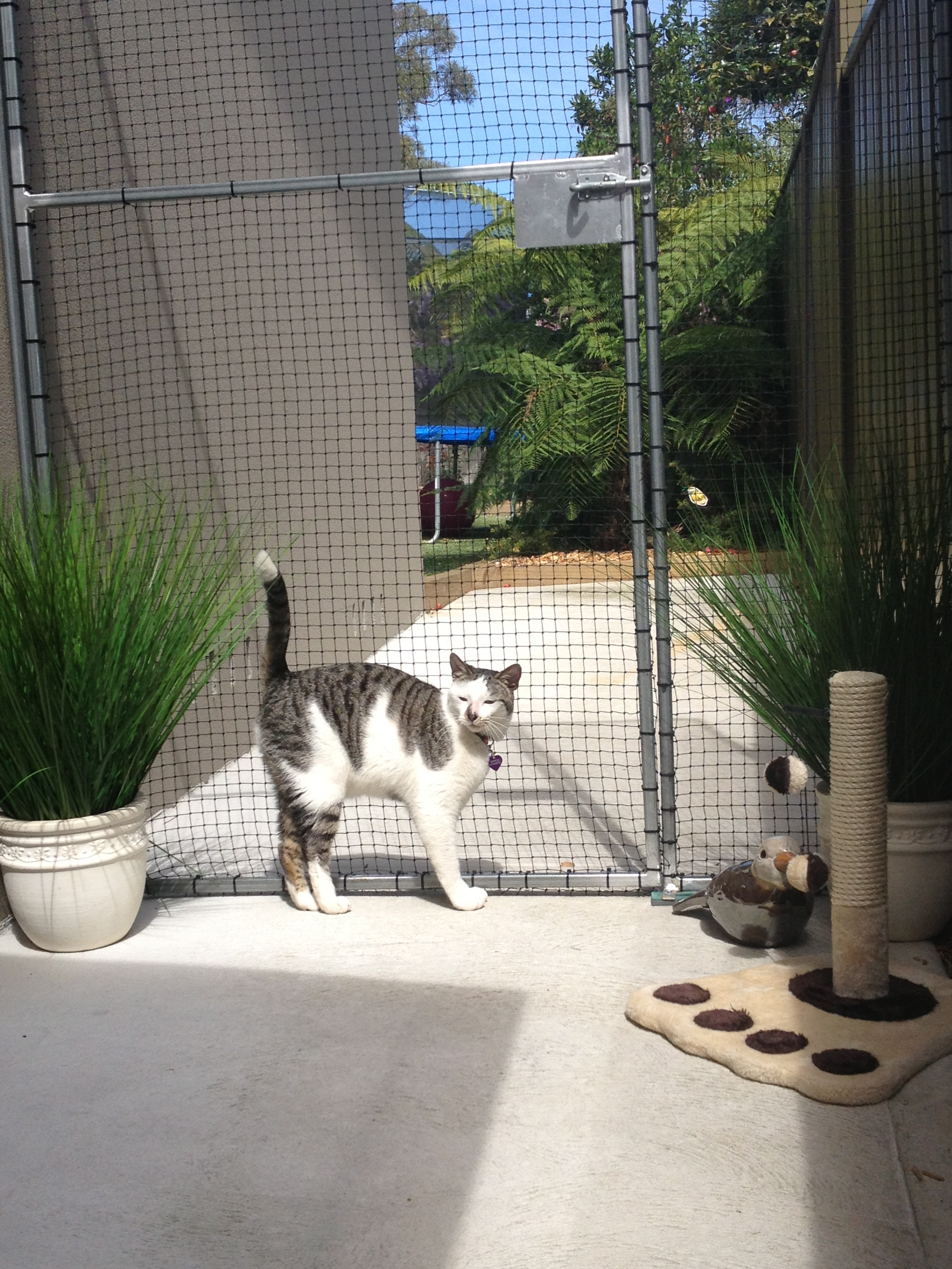 Caringbah Cat Hotel - Accommodation in Brisbane