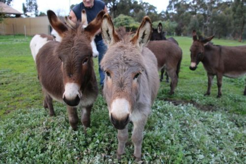 Donkey Tales Farm Cottages - Accommodation in Brisbane