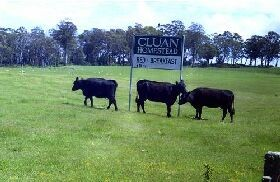 Cluan Homestead - Accommodation in Brisbane