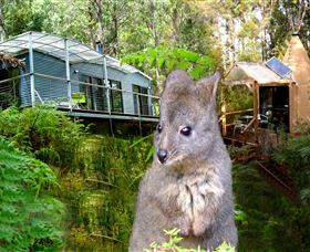Huon Bush Retreats - Accommodation in Brisbane