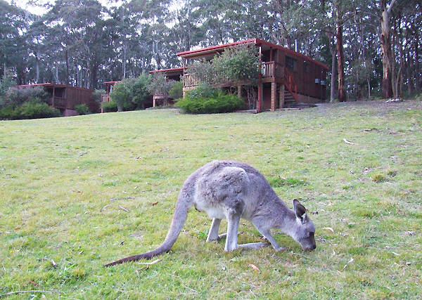 Jenolan Caves Cottages - Accommodation in Brisbane