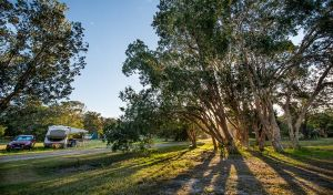 Delicate campground - Accommodation in Brisbane