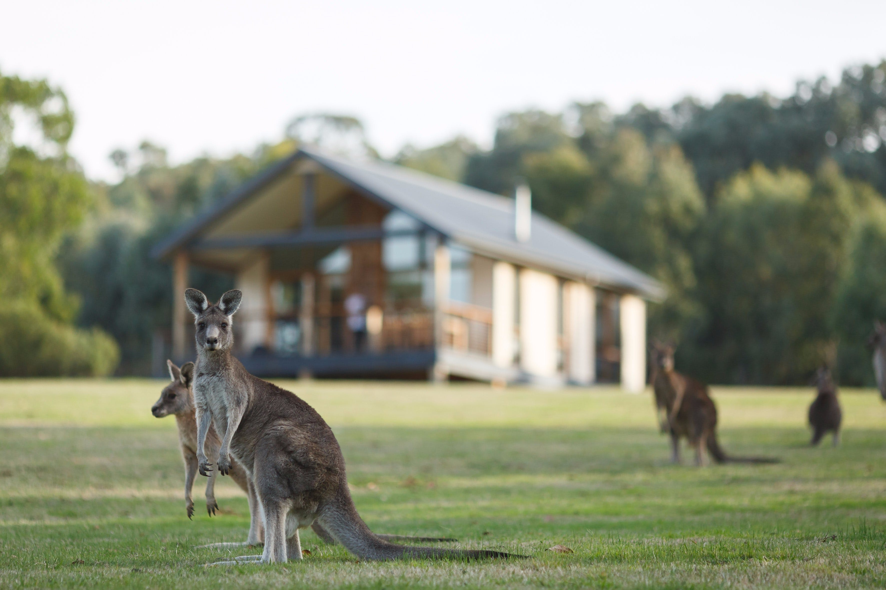 Yering Gorge Cottages - Accommodation in Brisbane