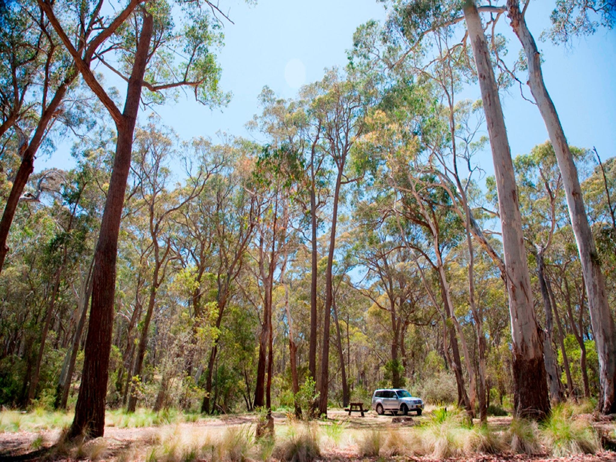 Coolah Tops National Park Camping - Accommodation in Brisbane