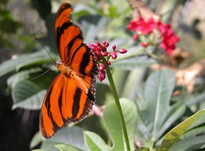 Butterfly Farm - Accommodation in Brisbane