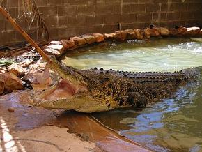 Wyndham Zoological Gardens and Crocodile Park - Accommodation in Brisbane