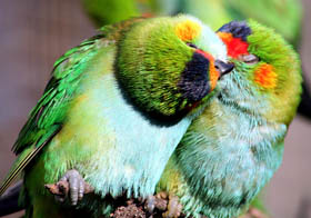 Rainbow Jungle - The Australian Parrot Breeding Centre - Accommodation in Brisbane