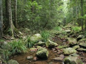 Amamoor State Forest - Accommodation in Brisbane