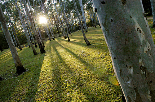 Tondoon Botanic Gardens - Accommodation in Brisbane