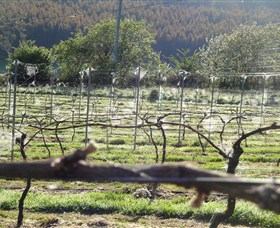 Three Willows Vineyard