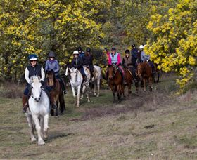 Burnelee Excursions on Horseback - Accommodation in Brisbane