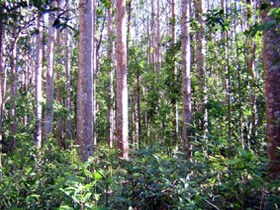 Cathu State Forest - Accommodation in Brisbane