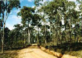 Paddys Ranges State Park - Accommodation in Brisbane
