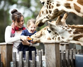 Taronga Western Plains Zoo Dubbo - Accommodation in Brisbane