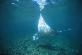 Manta Ray Bay Dive Site - Accommodation in Brisbane
