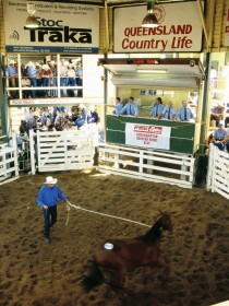 Gracemere Exhibition Complex