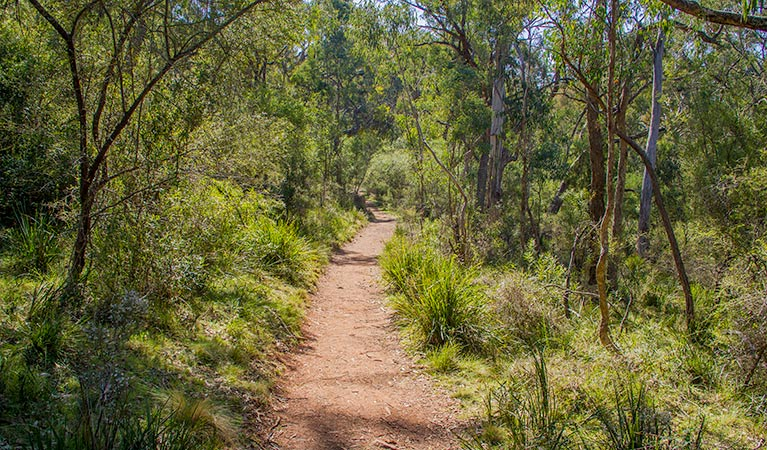 Mares Forest Creek walking track - Accommodation in Brisbane