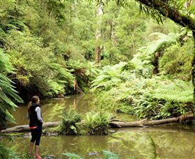 Morwell National Park - Accommodation in Brisbane