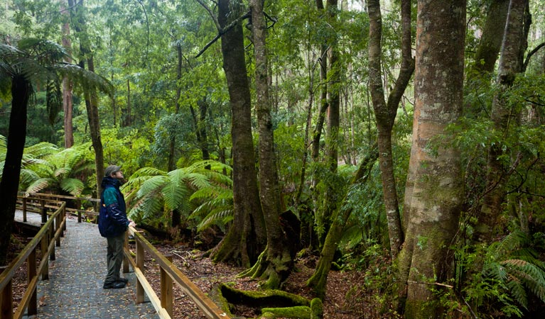 Monga National Park - Accommodation in Brisbane