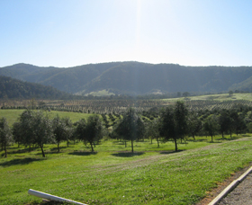 Hastings Valley Olives - Accommodation in Brisbane