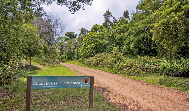 Antarctic Beech picnic area - Accommodation in Brisbane
