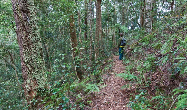 Blackbutt walking track - Accommodation in Brisbane