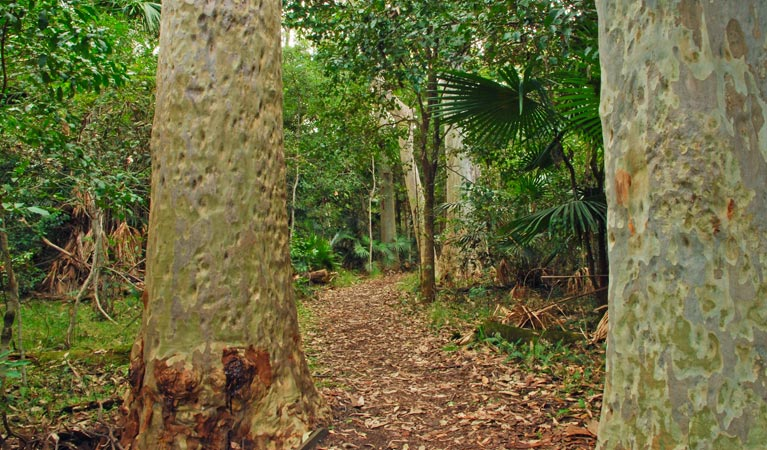 Depot Beach Rainforest walk - Accommodation in Brisbane