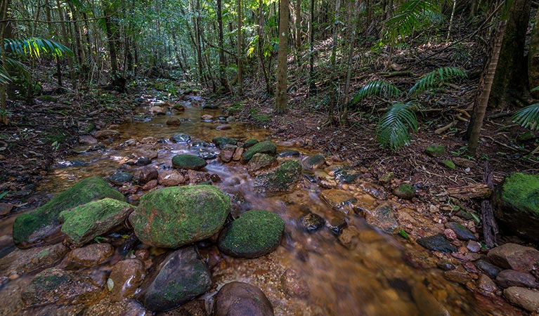 Starrs Creek picnic area - Accommodation in Brisbane
