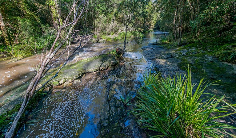 Dawson River walking track - Accommodation in Brisbane