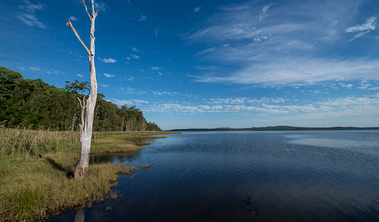 Lake Innes Nature Reserve - Accommodation in Brisbane
