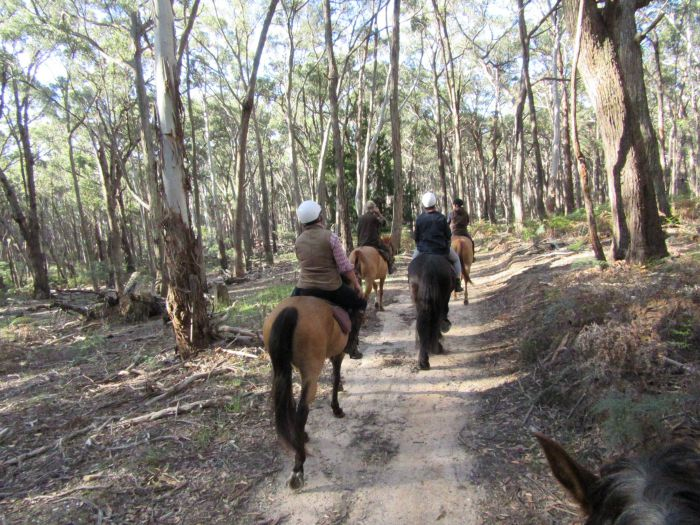 Silver Brumby Trails - Accommodation in Brisbane