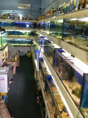 Clearwater Aquariums - Accommodation in Brisbane