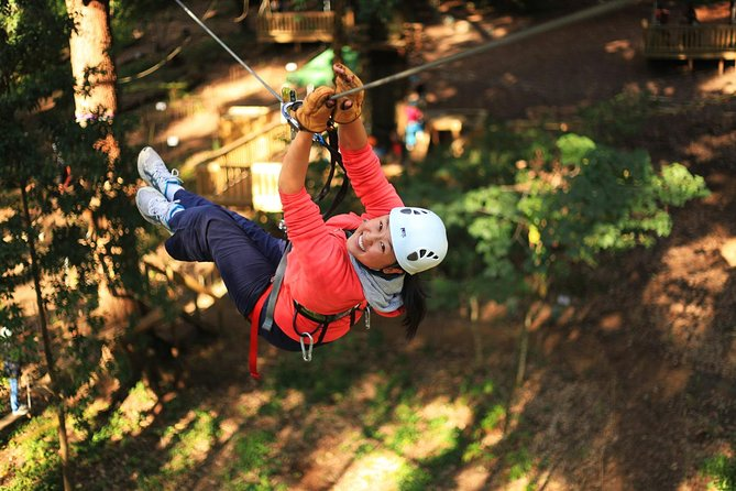 Trees Adventure Lane Poole Park - Treetop  Zipline Experience - Accommodation in Brisbane