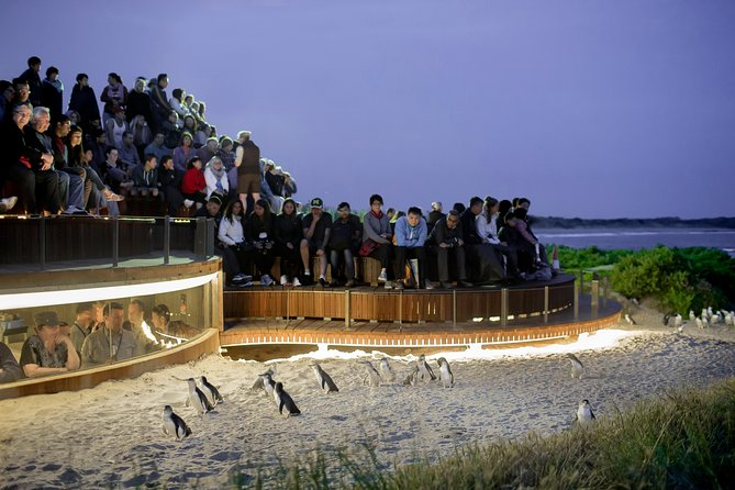 1 Day Private Phillip Island Tour VIP Charter up to 9 People - Accommodation in Brisbane