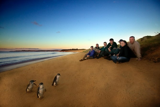Phillip Island Ultimate Penguin Eco Tour or Skybox Experience - Accommodation in Brisbane
