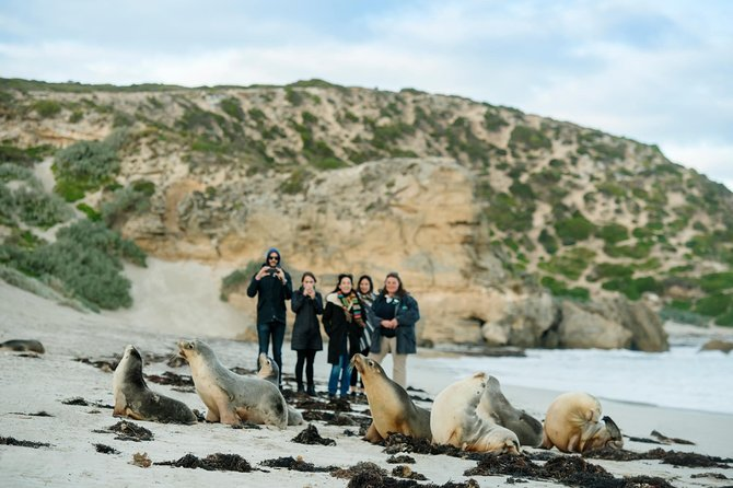 Small-Group Kangaroo Island 4WD Tour from Adelaide - Accommodation in Brisbane