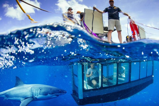 White Shark Tour with Optional Cage Dive from Port Lincoln - Accommodation in Brisbane