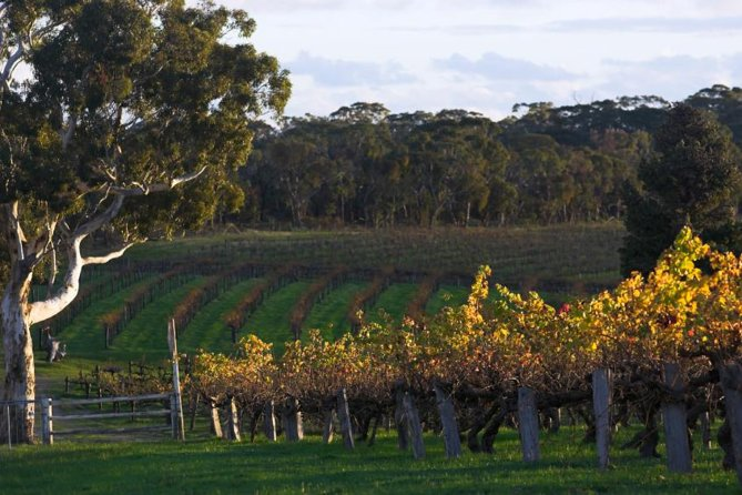 Barossa Valley with Hahndorf Tour from Adelaide - Accommodation in Brisbane