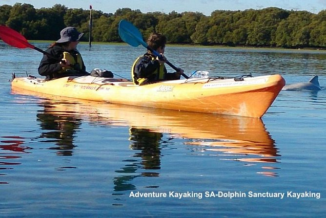 Dolphin Sanctuary and Ships Graveyard Kayak Tour - Accommodation in Brisbane