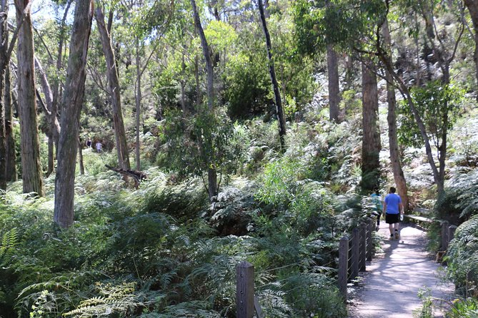 Self-Guided Waterfall Gully to Mount Lofty Hike from Adelaide - Accommodation in Brisbane