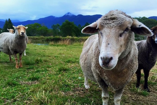 Trevena Glen Farm Animal Experience - Accommodation in Brisbane
