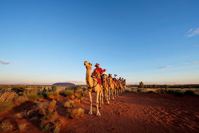 Uluru Camel Express Sunrise or Sunset Tours - Accommodation in Brisbane