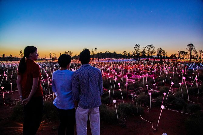 Uluru Field of Light Sunrise Tour - Accommodation in Brisbane