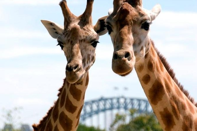 Sydney Harbour Ferry with Taronga Zoo Entry Ticket - Accommodation in Brisbane