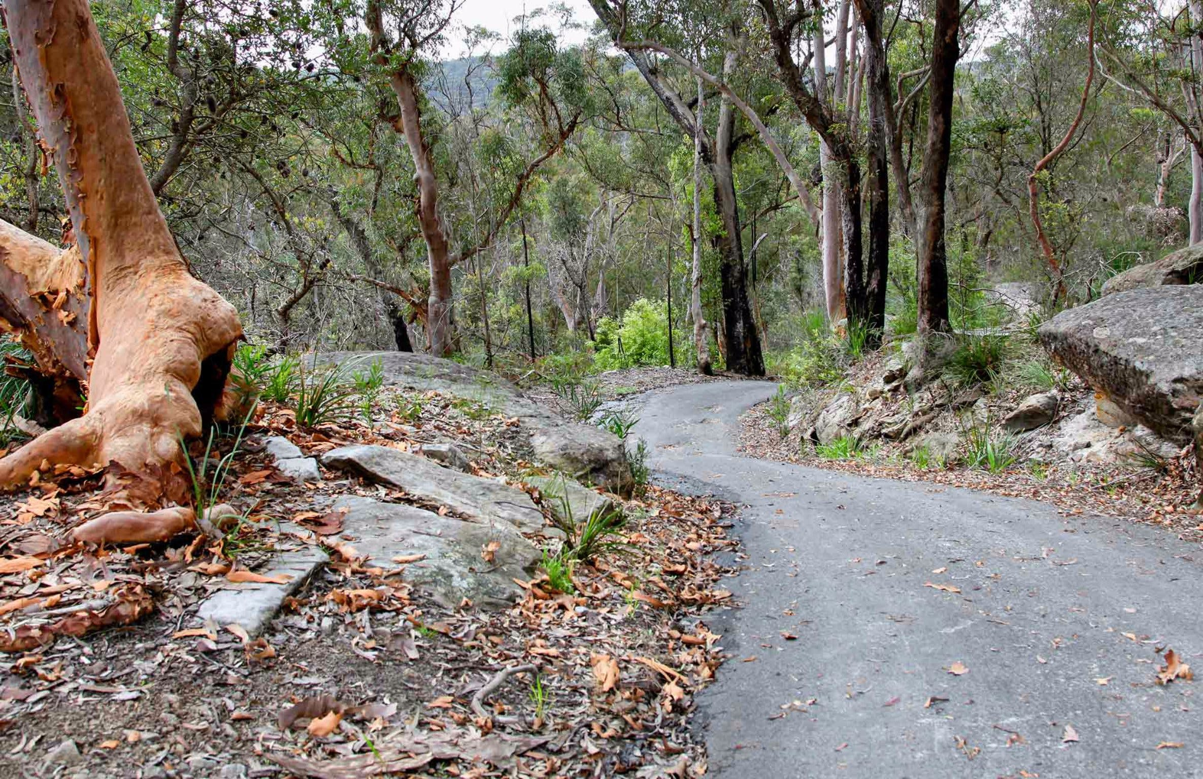 Stepping Stone Crossing to Cascades Trail - Accommodation in Brisbane